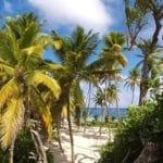 Doudou, papaye, zombie… 10 mots venus des Antilles !